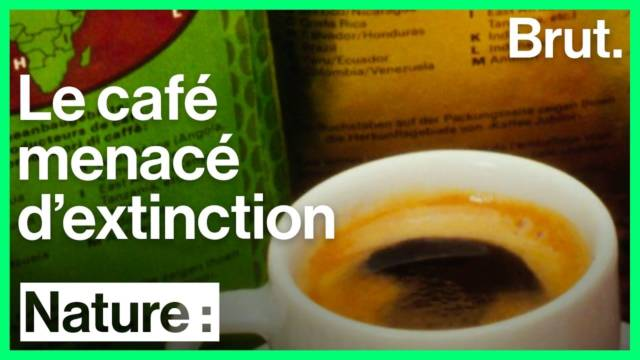 cafe-menace-extinction