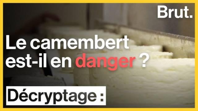 camembert-en-danger-aop