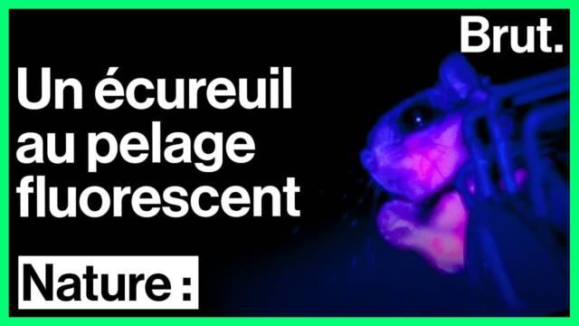 ecureuil-fluorescent