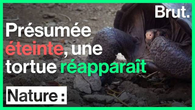 extinction-rat-tortue-reapparition