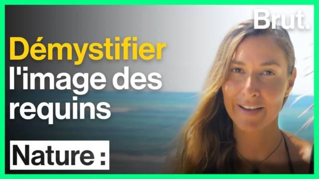 image-requins-demystifier